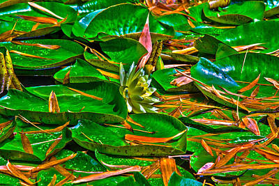 Photograph - The Pond 3 by Richard J Cassato