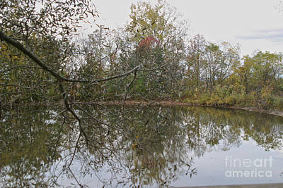 Photograph - The Pond by William Norton