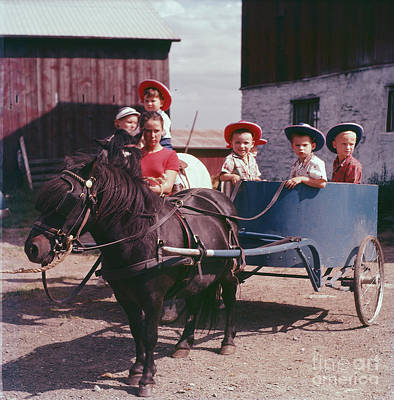 Photograph - The Pony Cart by Vintage Photography