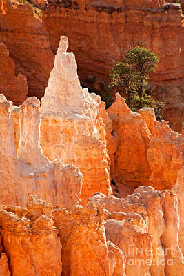 Photograph - The Pope Sunrise Point Bryce Canyon National Park by Fred Stearns