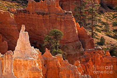 Photograph - The Popesunrise Point Bryce Canyon National Park by Fred Stearns