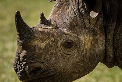 Fruits And Vegetables Still Life - The Portrait of a Black Rhino.... by Suneet Bhardwaj