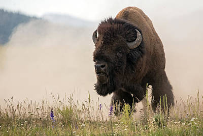 Bison Photograph - The Power And The Passion by Sandy Sisti