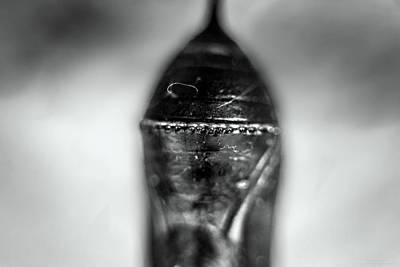 Photograph - The Power Of The Univers In A Tiny Capsule by Denise Dube