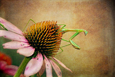 Digital Art - The Praying Mantis by Trina  Ansel