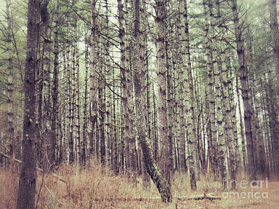 Photograph - The Preaching Of The Pines by Kerri Farley