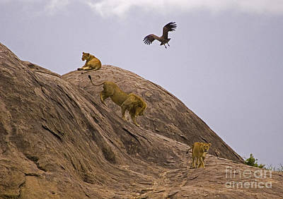 Art Print featuring the photograph The Pride by J L Woody Wooden