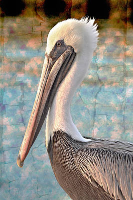 Pelican Photograph - The Prince by Debra and Dave Vanderlaan