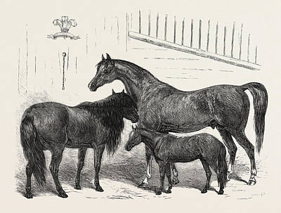 Indian Horse Drawing - The Prince Of Wales Indian Horses At The Agricultural Hall by Indian School