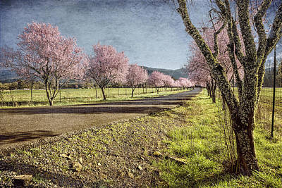 Photograph - The Promise That Spring Makes by Belinda Greb