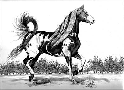 Pinto Drawing - The Proud Pinto Saddlebred Stallion by Cheryl Poland