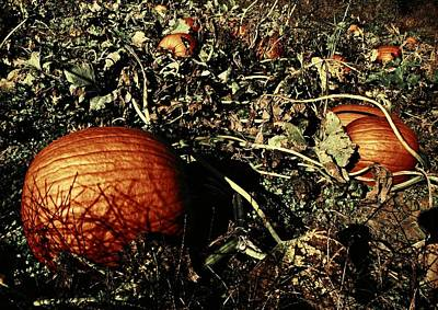 Photograph - The Pumpkin Patch by Chris Berry