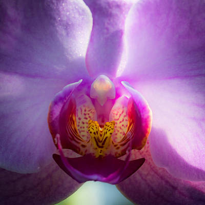 Pinks And Purple Petals Photograph - The Purple Orchid by David Patterson
