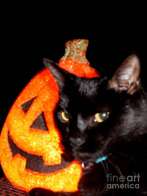 Photograph - The Purrfect Halloween Pumpkin In New Orleans Louisiana by Michael Hoard