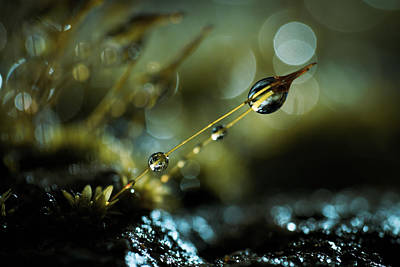 Dew Photograph - The Quantum Theory Of Gravity by Fabien Bravin