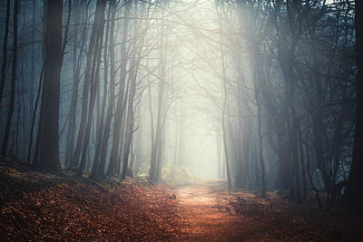 Licht Wall Art - Photograph - The Quiet Path by Dirk Wuestenhagen
