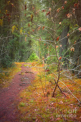 Photograph - The Quiet Path by Tara Turner