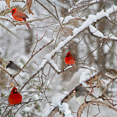 Birds In Snow Wall Art - Photograph - The Quiet Within The Forest by Betsy Knapp