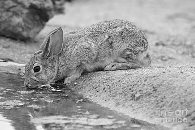 The Rabbit And The Water Art Print