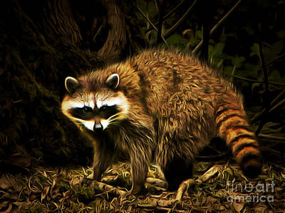 Photograph - The Raccoon 20150211brun by Wingsdomain Art and Photography