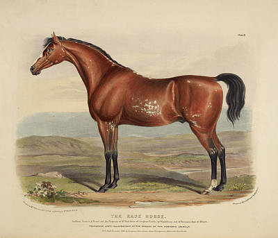 Portaits Photograph - The Race Horse by British Library