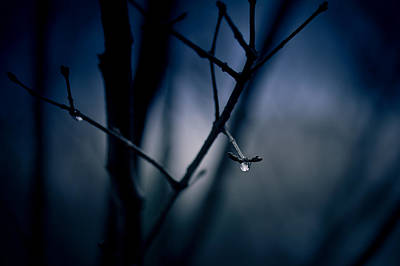 Rain Droplet Photograph - The Rain Song by Shane Holsclaw
