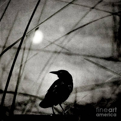 Photograph - The Raven And The Orb by Sharon Kalstek-Coty