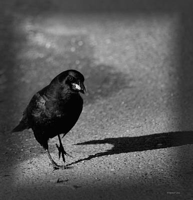 Photograph - The Raven II by Maria Urso