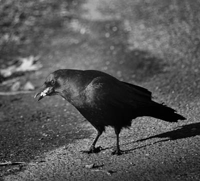 Photograph - The Raven IIi by Maria Urso