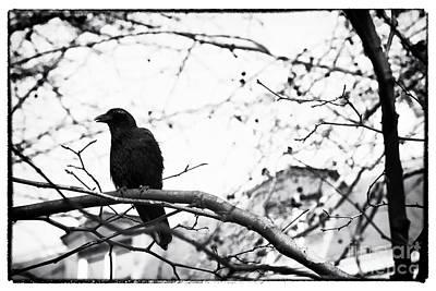 The Raven Art Print by John Rizzuto