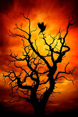 Photograph - The Raven by Meirion Matthias