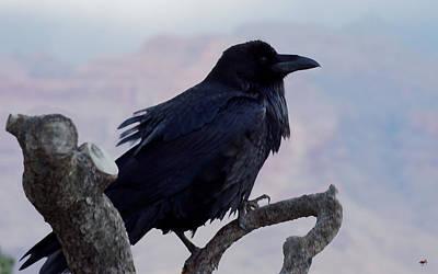 Bird Brain Photograph - The Raven's Perch by Lorenzo Williams