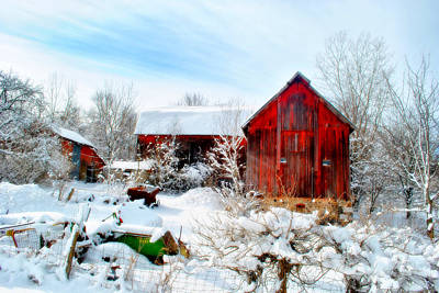 Photograph - The Red And White by Emily Stauring
