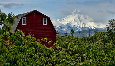 Photograph - The Red Barn And Mt. Hood by Don Schwartz