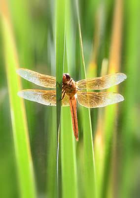 Photograph - The Red Dragonfly  by Saija  Lehtonen