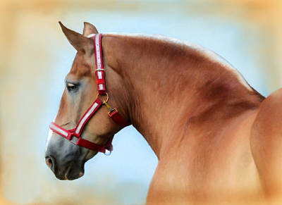 Draft Horses Digital Art - The Red Halter by Posey Clements