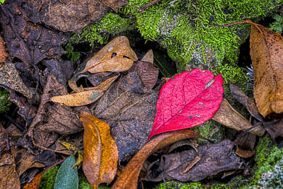 Photograph - The Red Leaf by Lewis Mann