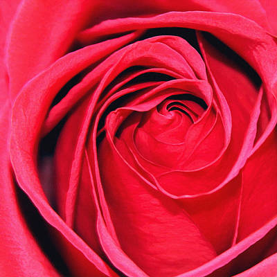 Painting - The Red Rose Blooming by Karon Melillo DeVega