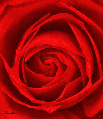 Flowers Painting - The Red Rose by George Rossidis