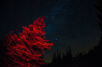The Red Tree On A Starry Night Art Print by Brian Xavier