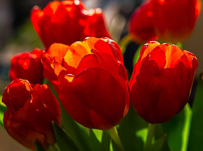 Photograph - The Valentine Tulips by Tomasz Dziubinski