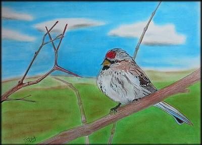 The Redpoll Art Print