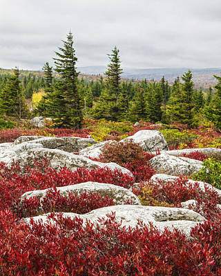The Reds And Greens Of Dolly Sods Wilderness In West Virginia Art Print by Bill Swindaman