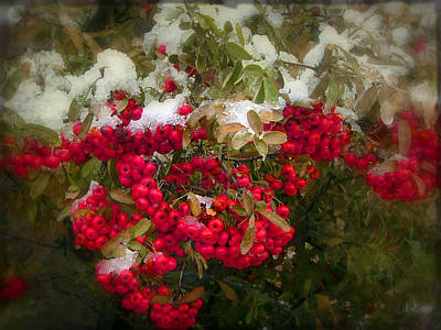 Photograph - The Reds And Greens Of The Season by Lucinda Walter