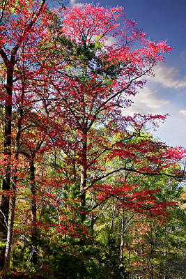 Photograph - The Reds Of Autumn by Lana Trussell