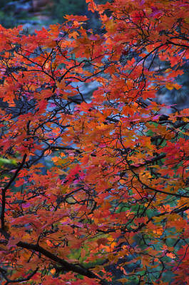 Photograph - The Reds Of Autumn  by Saija  Lehtonen