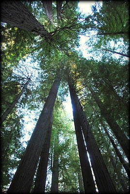 Photograph - The Redwood Giants by Kathy Sampson