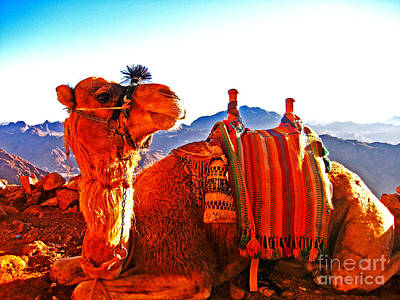Photograph - The Regal Camel Of Mt Sinai by Alison Tomich