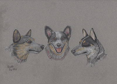 Cattle Dog Mixed Media - The Rescues by Scott Suitts