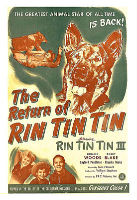 Hands Behind Head Photograph - The Return Of Rin Tin Tin, Us Poster by Everett